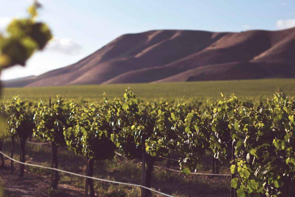 Netofa Winery